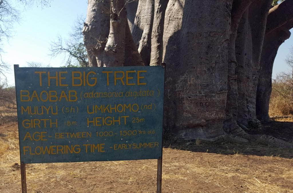 Simbabwe - jede Mengen Felsen, Elefanten und Polizeikontrollen - ein ...